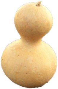 Gourd Wu Lou