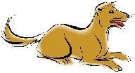 Dog 2014 Chinese Animal Predictions