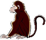monkey-shen1
