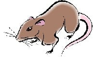 2013-rat-almanac