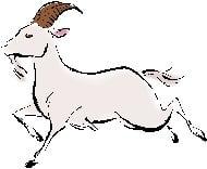sheep-wei1