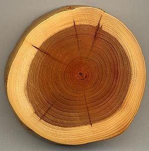 Wood Feng Shui
