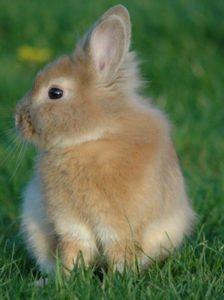 Feng Shui Rabbit