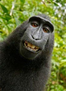 Chinese animal monkey
