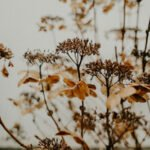 Dying plants and Feng Shui