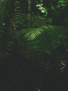 Feng Shui spiky plants
