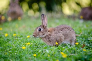 Chinese animal Rabbit predictions for 2021