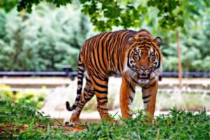 Feng Shui Tiger 2021 predictions